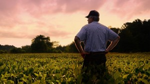 Cover photo for Essential Agricultural Employee Waiver