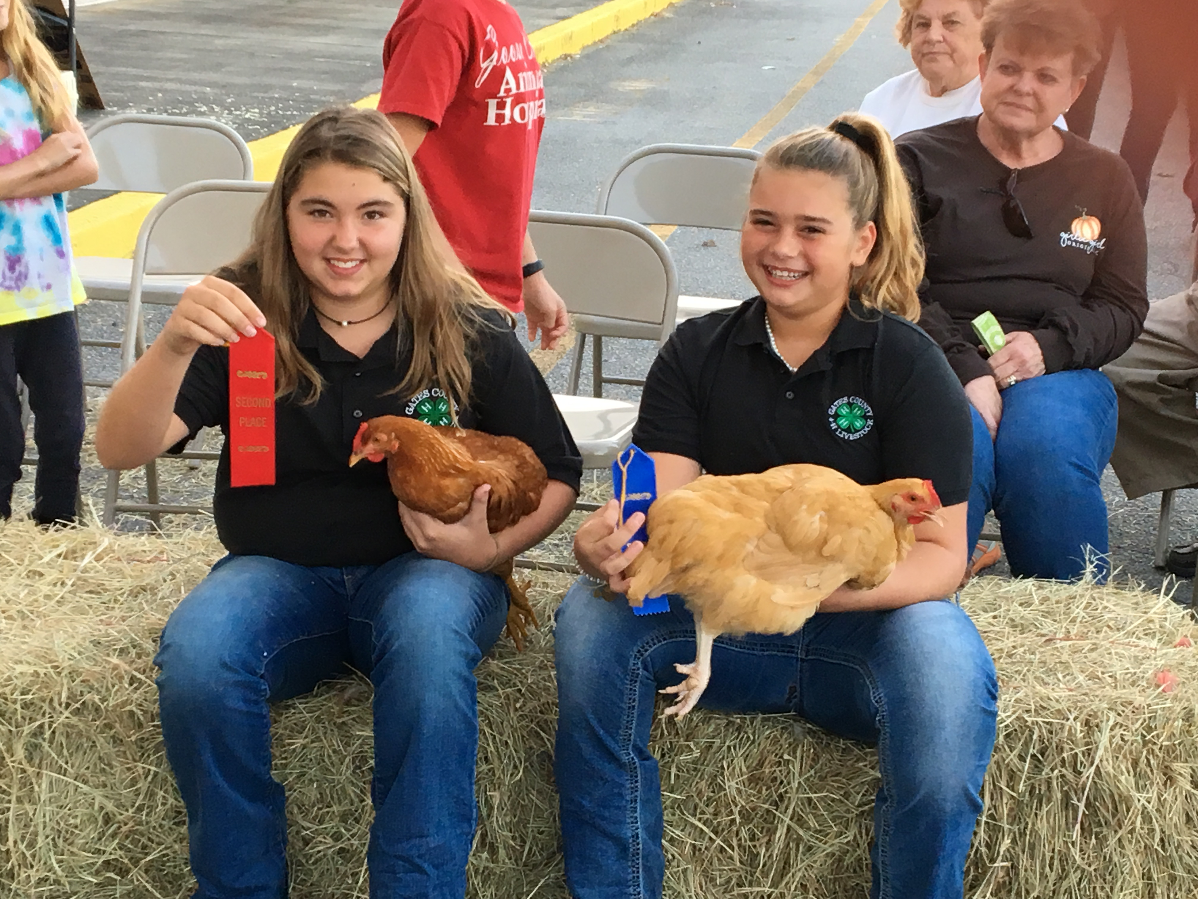 red and blue ribbon winners with chickens