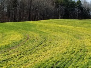 Cover photo for How Much Nitrogen Should I Use at Top-Dressing?